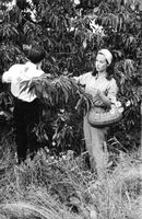 A man and a woman picking flowers in the woods.