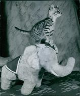 Cat standing on the elephant stuffed toy.