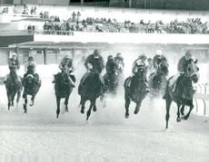 Horses gallop in the snow on the derby