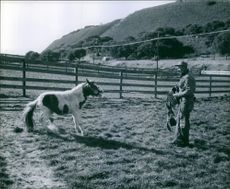Man giving training to horse in the field.