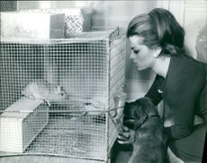 Parrette Pradier pampering animal. Photo take on March 5,1965