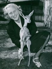 """Pom"", gazelle brought home from Ethiopia with Mrs. B. Thergen. 1951"