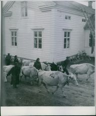 A scene from the refugee camp in Tornio.