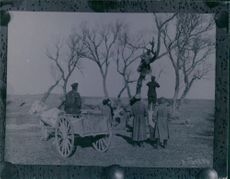 Soldiers standing and climbing on the tree, tying rope while a soldier siting on the cart.