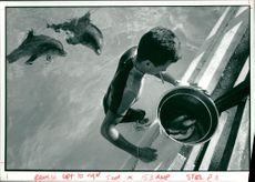 Dolphin trainer  Jimmy Sandstorm with Nemo and Limo.