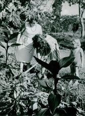Woman gardening, holding spade and digging in the garden. 1964