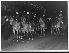 Mounted Police in the New Year night on Kungsgatan in Stockholm