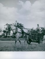 A woman driving a horse carried by a carriage in 1942.