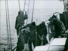 Fishermen on the fishing boat, inspecting their catch.