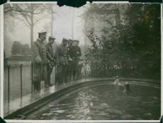 A photo of sea lions in a zoo while soldiers watching them swimming.