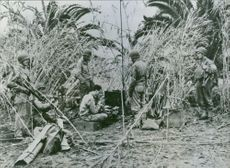 United states soldiers set up radio equipment in tropical terrain near Fedala, Morocco. 1943