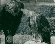 Mr Phillip Glasier with his largest bird,a golden eagle.