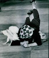 Russian circus artist Oleg Popov is performing in a event, while he is lay down in floor to catch a hen