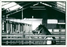 The loneliness of the horse sale.