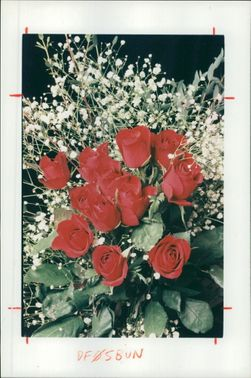 The best presented roses.