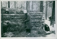 Soldier standing beside stack of wooden logs in the forest during WW2, 1940.