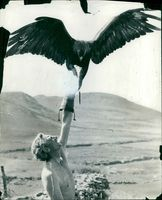 Atalanta spreads her 8ft wingspan.