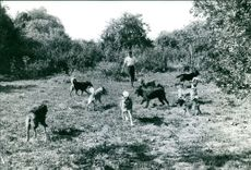 Man playing with dogs.