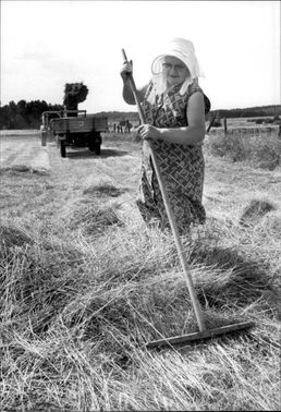 Hildegard Künne scratches hay, while the son Günter runs the hopping machine in the background