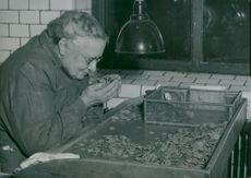 Mrs. Elsa Forslund sorts rubber gaskets with the help of her highly developed sense of smell at Apotekarnes Mineralvattenfabrik