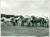 Royal Norfolk Show: Horse Competition