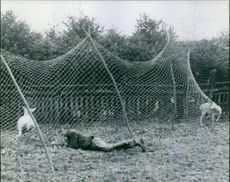 Man lying on the ground to catch the deer.