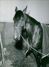 A horse in a box stall inside a stable.