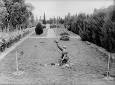 A man raising his hand with a flower from the garden in Hassi Messaoud - Saharan in Algeria