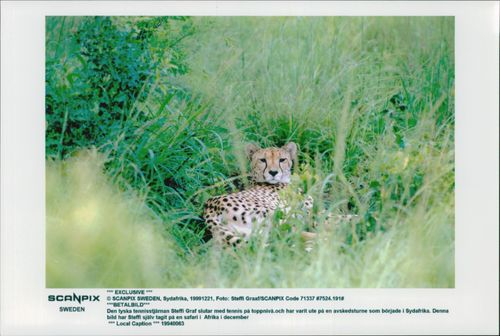 Taken by German tennis player Steffi Graf on safari in South Africa