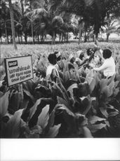 A BASF advisor explains the use of agricultural chemicals to South Indian farmers