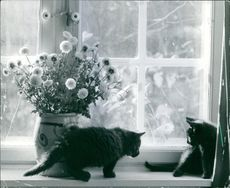 Cats sitting on the window beside the flower pot.