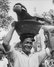 Animal head being carried by man in Bali, Indonesia. 1963