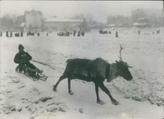 A man riding a reindeer sled on a snowy winter.
