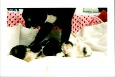 Tiddles with her kittens.