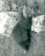 A view of Otter.