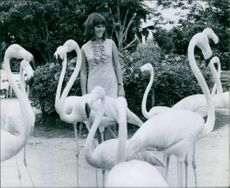 A beautiful woman standing in garden, looking at the white flamingoes and smiling.