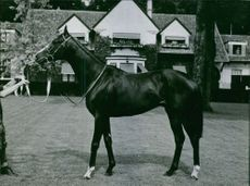 A black Horse of Yves Saint-Martin standing in front of a house.