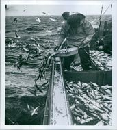 1964 Fishermen throwing fishes back into sea.