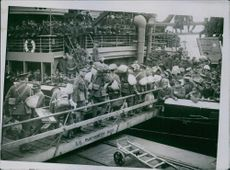Troops going aboard to Southampton.