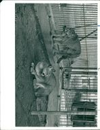 View of animals in the cage.