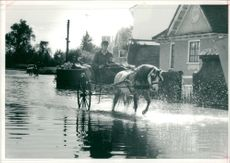 Floods 1966-1989:Jennifer barker simpson.