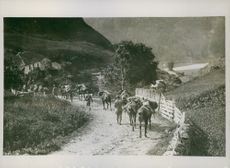 Soldiers moving forward with their horses and baggage through the mountainside road, 1917.