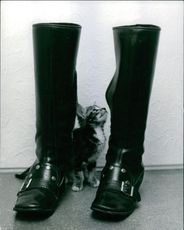 Cat looking at the boots. 1971.