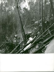 Rustic area in the forest, 1962.