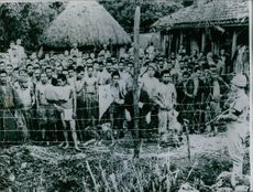 Group of surrendered Japanese soldiers.