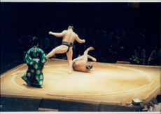 Sumo rioters in full action during the match in London Albert Hall