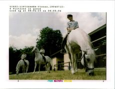 Austrias famous white stallions take vacations from the spanish riding school.