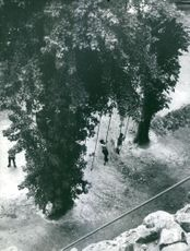 People hanging on ropes that hangs from the tree.