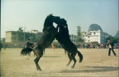 ANIMAL HORSES Competitions