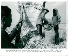 Mekong Delta farmers harvest rice under the PSDF guard